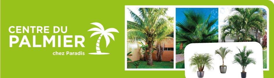 Paradis jardins accessoires - Centre educatif du palmier ...